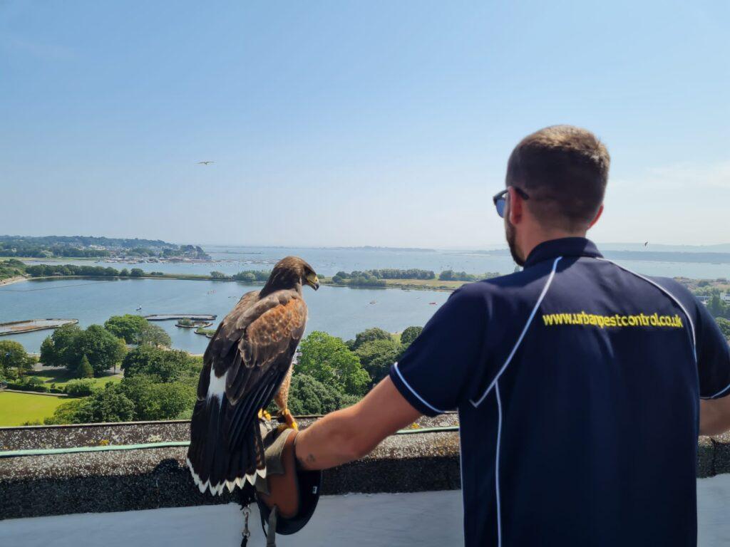 Hope the Hawk - Falconry Services Dorset