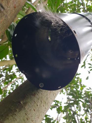 squirrel control bournemouth slider