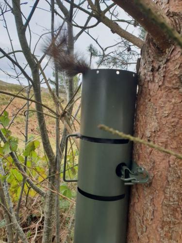 squirrel control bournemouth