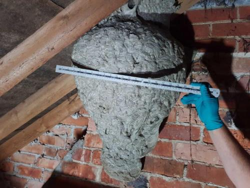 wasp nest removal Poole