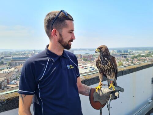 Hope - Falconry Services Dorset