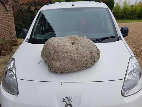 wasp control Wimborne