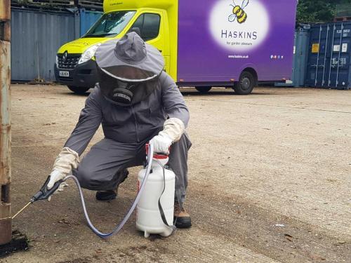 wasp control Ferndown