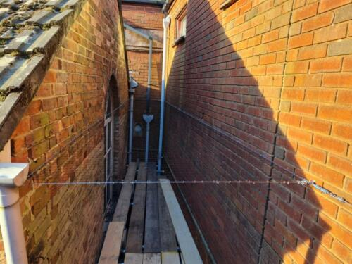 Bird Proofing Bournemouth
