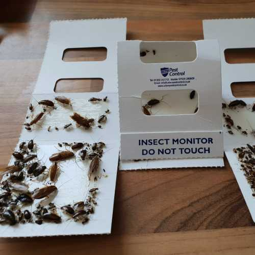 cockroach control Bournemouth