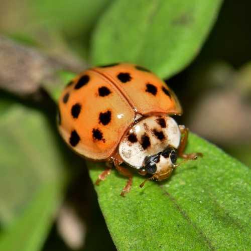 ladybird control Bournemouth