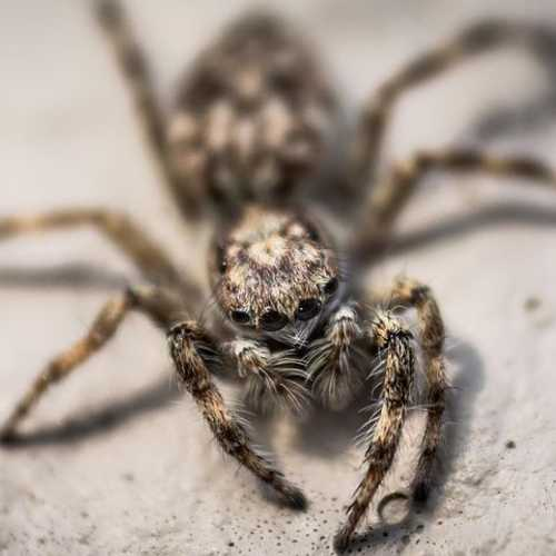 spider control Bournemouth